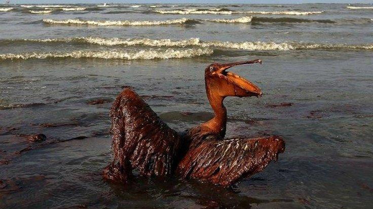 BP Meksika Körfezi Sızıntısı, 2010